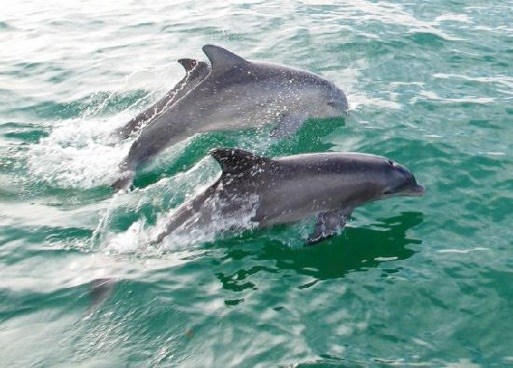 Dolphin Boat Tours Cape Coral